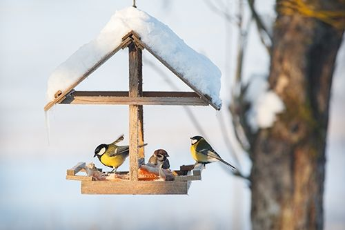 Voer De Vogels